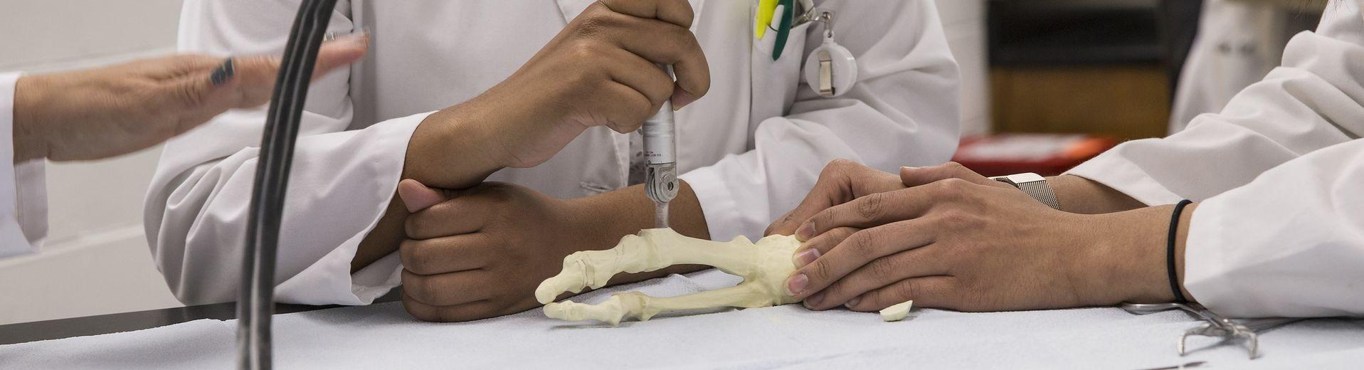 students studying foot bones